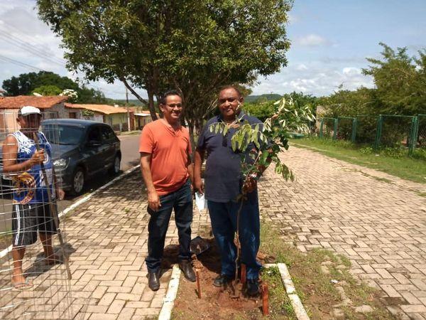 A Secretaria da Agricultura e do Meio Ambiente fazendo o replantio de árvores